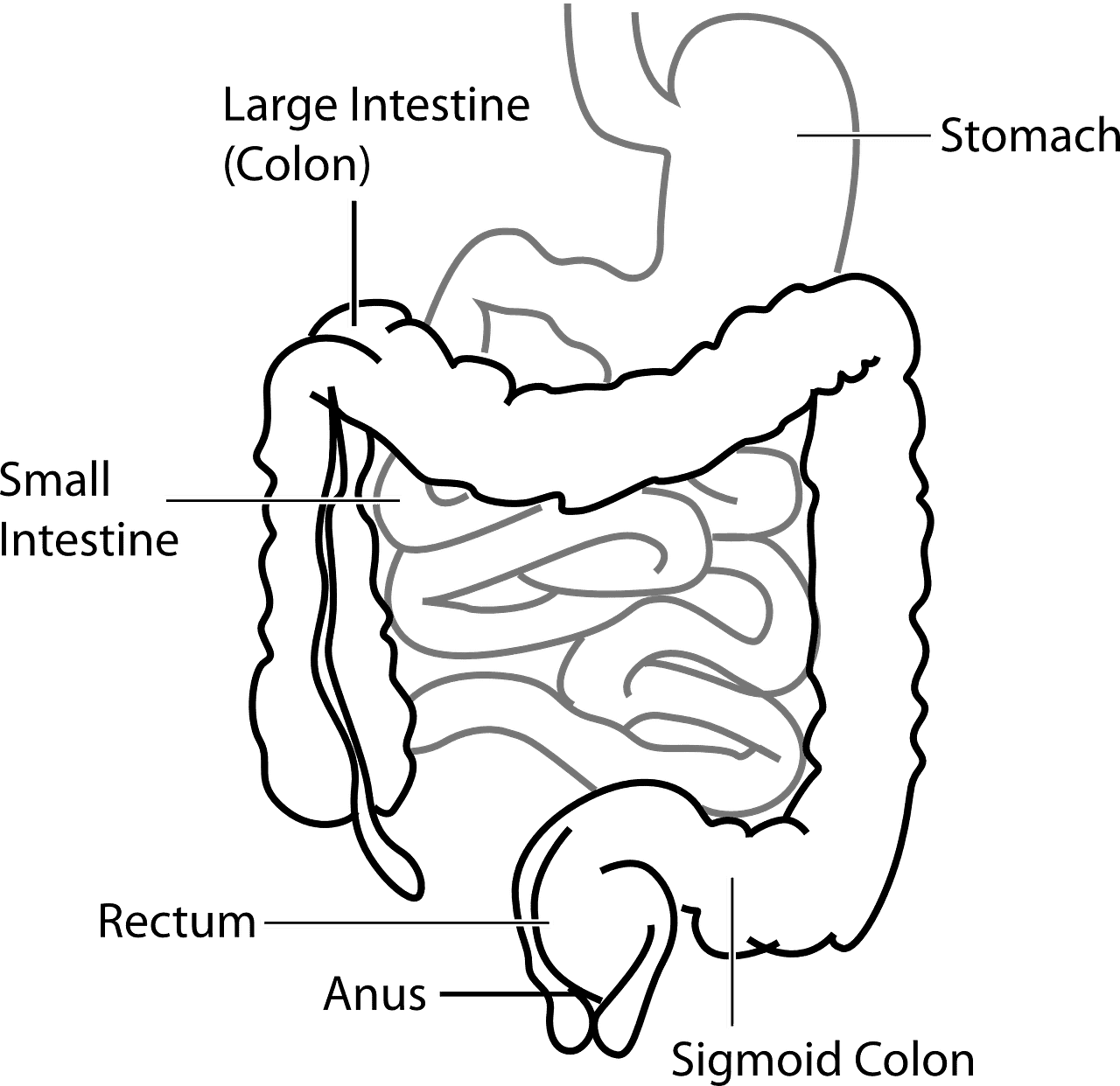 Image of the gastric system