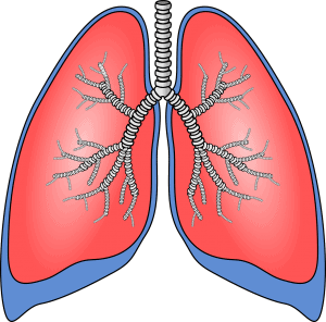Picture of the airways of the lungs